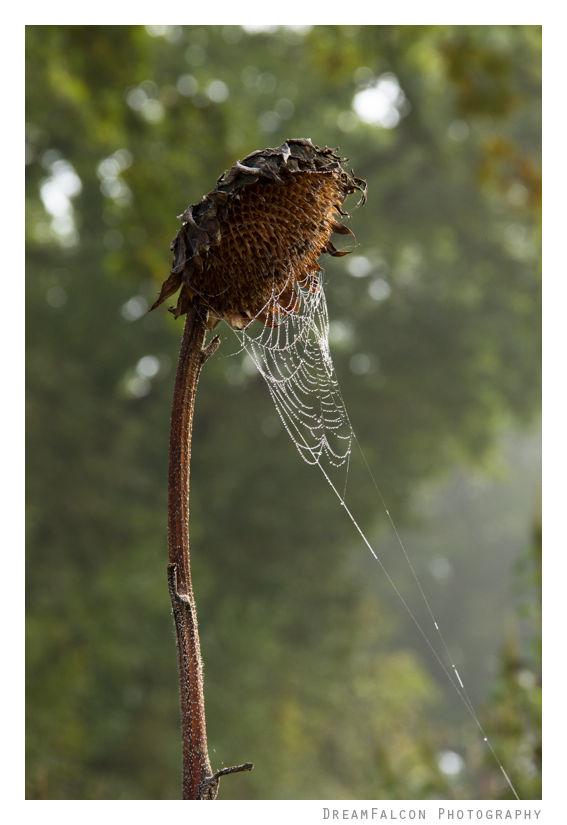 20150926_spiderweb-15